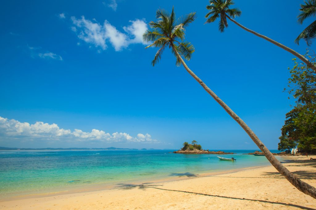 Inspiring travel quotes: palms swaying on a beach.