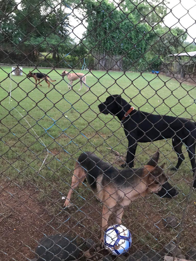 Playing ball at Phoebe's Farm, Khopoli