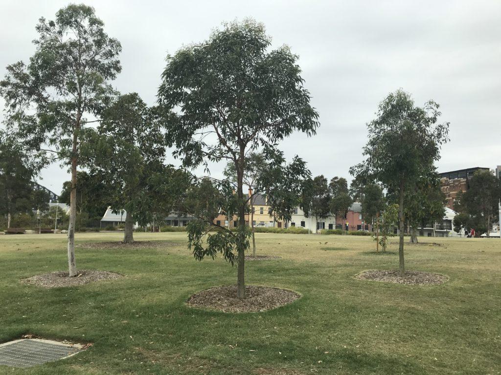 Barangaroo Reserve opens up six hectares of headland, with 75,000 native Australian trees and shrubs.