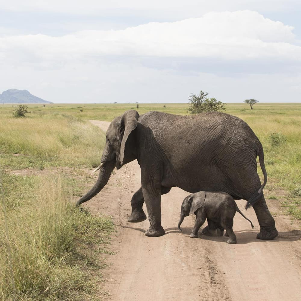 Viator has launched #RoamFromHome with virtual tours like an African safari.