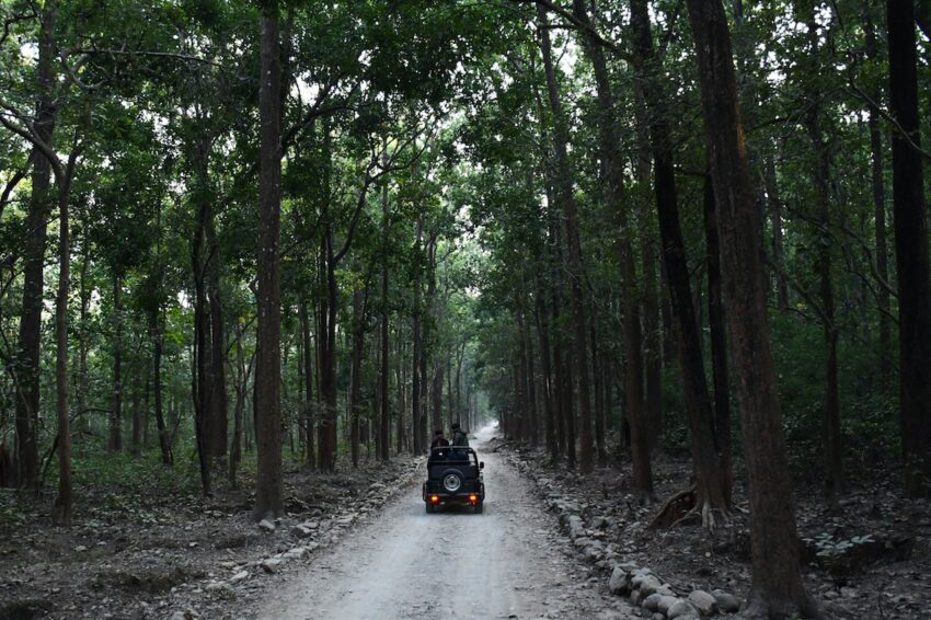A road trip to Jim Corbett National Park.